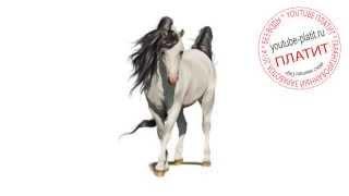 Нарисованные лошади  Как научиться рисовать лошадь(как нарисовать лошадь, как нарисовать лошадь поэтапно, как нарисовать карандашом лошадь, как нарисовать..., 2014-08-07T06:13:56.000Z)