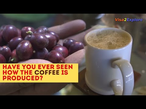 Coffee From farm to a cup of Coffee | Coorg, Karnataka, Indian Filter Coffee
