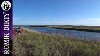 Ловля змеголова на поставки Топарские озера Август 2021г
