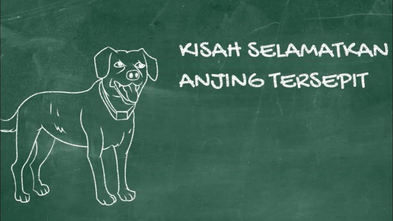 Bagai Melepaskan Anjing Tersepit In English