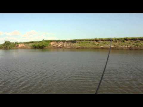 ловля судака на отводной поводок на ахтубе