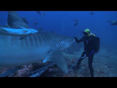 Shark Reef Marine Reserve