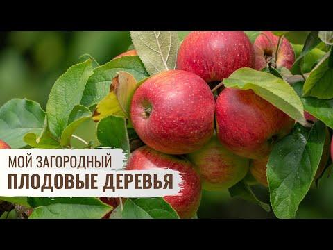 Плодовые деревья \\ Мой Загородный \\  Cерия 2