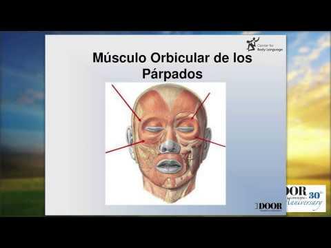 Conociendo las MicroExpresiones Faciales - Negocios