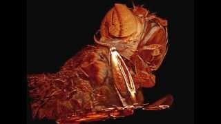 El interior de una mosca
