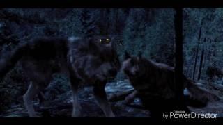 Twilight 5 (extrait clip)