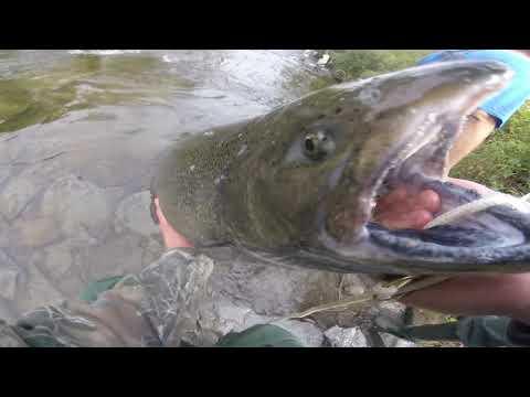 Epic Salmon Run - Pulaski Salmon River -