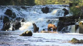 Southeast Alaska Sightseeing Tour
