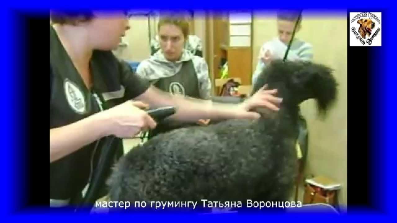 Продается щенок керри блю терьера, мальчик. 3 сен в 18:18 ⋅ 2. 1 пипетка 450 рублей (в петшопе цена 725 рублей за пипетку). В упаковке 4.