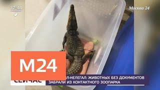 Животных без документов забрали из контактного зоопарка - Москва 24