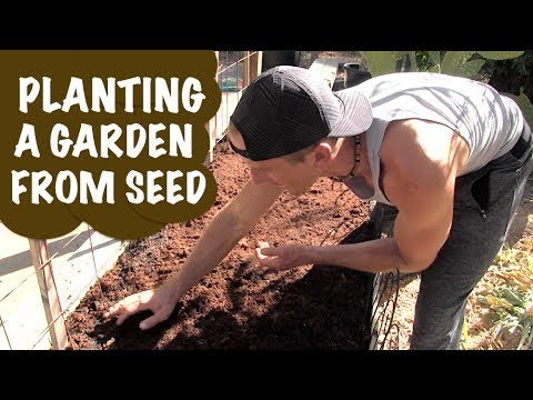 How to Plant a Backyard Garden from Seed | Soil, Water, Fertilizer, Seeds, Compost!