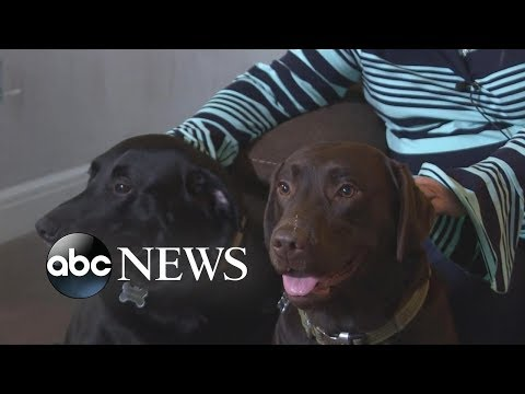 Dogs Run For Help After Owner Has Stroke   GMA