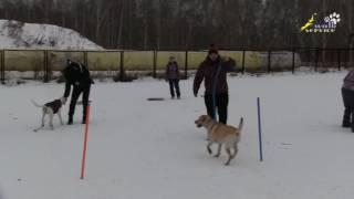 Дрессировка собак на площадке, одна из проблем группового занятия