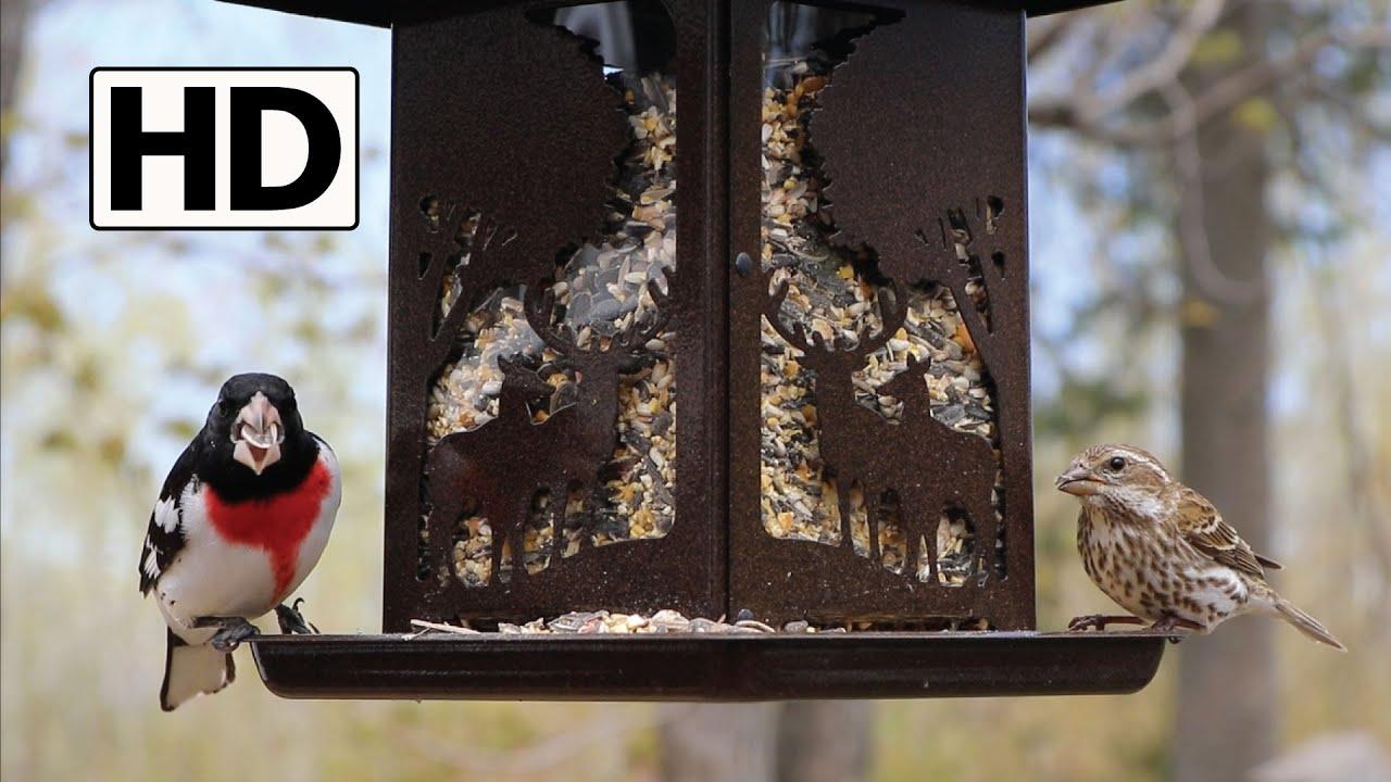 diy hummingbird stars side sunshine view feeder gallon one hb
