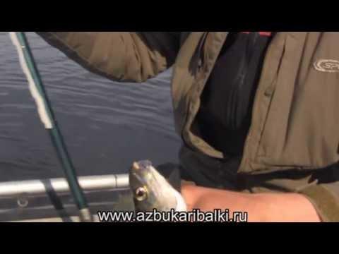 Рыбалка в Карелии. Сиги Пяозера 2013 часть 1
