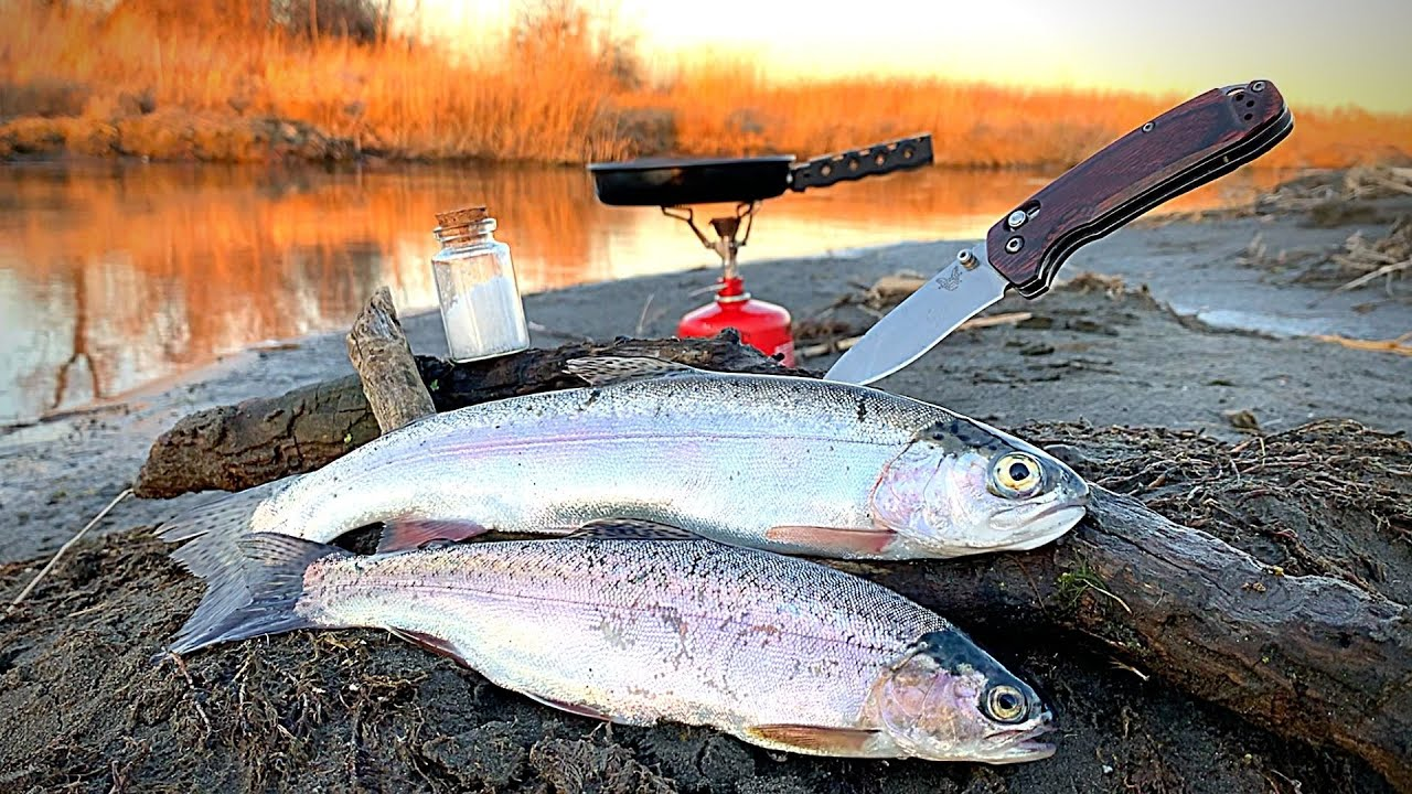 Download RAINBOW TROUT Fishing CLEAR REMOTE Creek!!! (Catch & Cook)