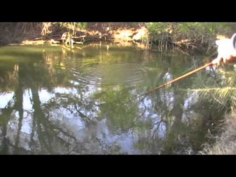 how to catch murray cod on surface lures