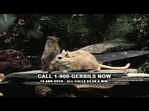 Gerbil Porn Volume 15 DVD Trailer