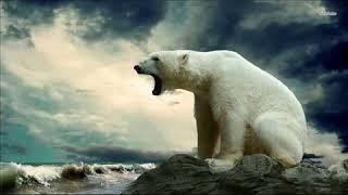 Odgłosy niedźwiedzia polarnego