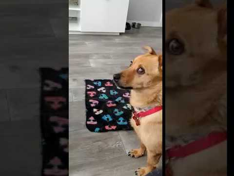 Howl with me hooman! Funny Dog Video!