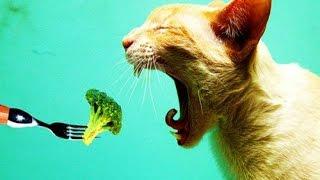 Зверье на диете / Animals on a diet