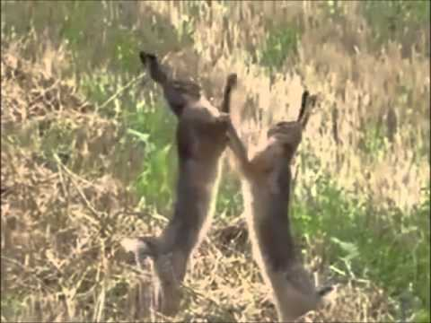 6465e44cf Rabbits Kung Fu Fighting - YouTube