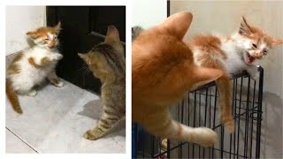 First Time The Rescue Kitten Meet With The Other Kittens, Angry & Hissing  Cats Meowing