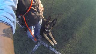 Practice Makes Perfect Dog Training Advanced Obedience Off Leash