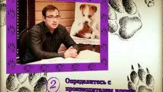 Диетология собак с Ярославом Рюминым 1