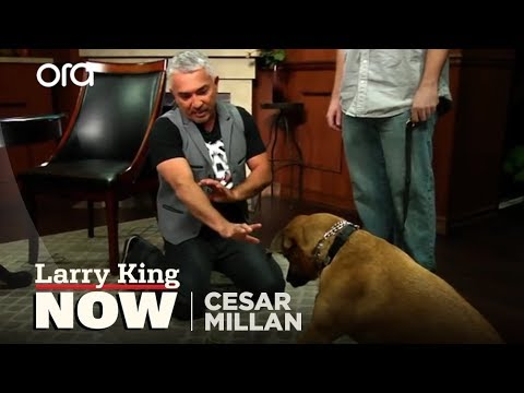 "Cesar Millan on ""Larry King Now"" - Full Episode Available in the U.S. on Ora.TV"