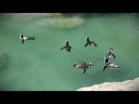 Chilean National Zoo Santiago Uncut