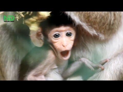 Hard Training Mom Teach For Newborn Baby Monkey, Nature Daily