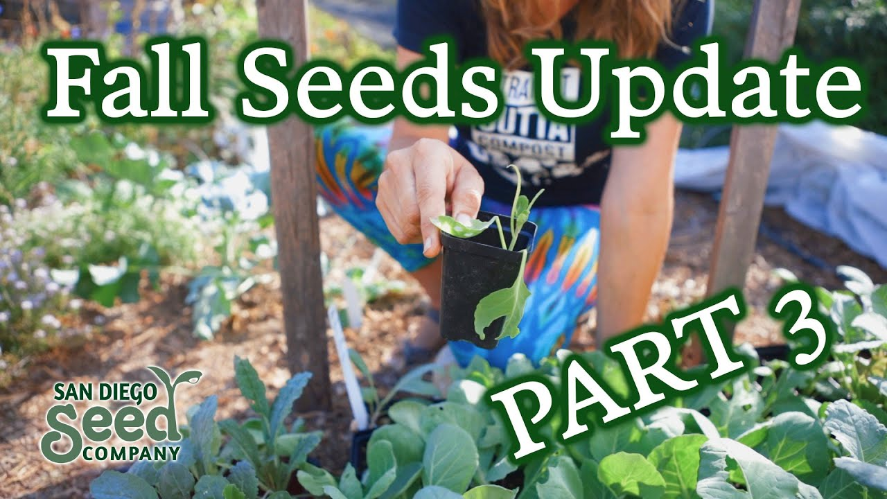 Download Part 3: Planting Fall Seed Starts | Checking In On The Seedlings