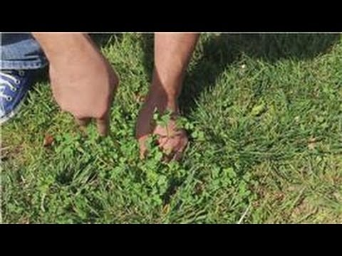 Garden And Lawn Help How To Pull Weeds