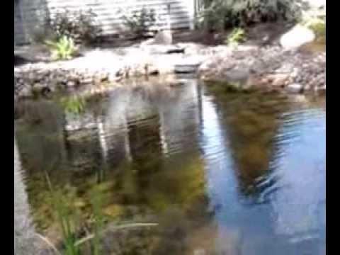 1200 gallon koi pond youtube for Koi pond gallons