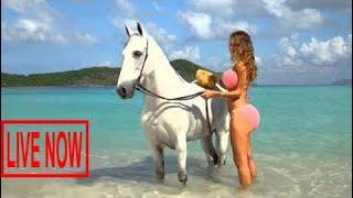 Sexy Girls Bathing a Horse Beautiful Lady Women Washing Cleaning Funny Tricks Smart Farming #SON