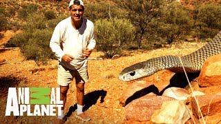 La serpiente más temida de Australia   Wild Frank: Tras la evolución de las especies   Animal Planet