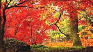 Волшебная осень в Японии музыка японский саксофон автор клипа Зоя Боур-Москаленко