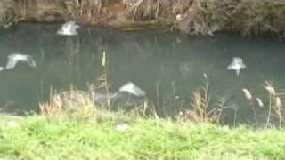 Canal de Lunel