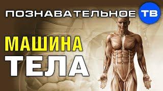 Машина человеческого тела (Познавательное ТВ, Роман Василишин)