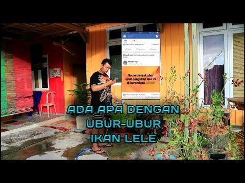 Download 40 Gambar Ubur2 Ikan Lele HD Terpopuler