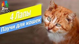 Консервы для кошек Клуб 4 лапы | Обзор паучей для  кошек Клуб 4 лапы | Club 4 Paws fore cats review