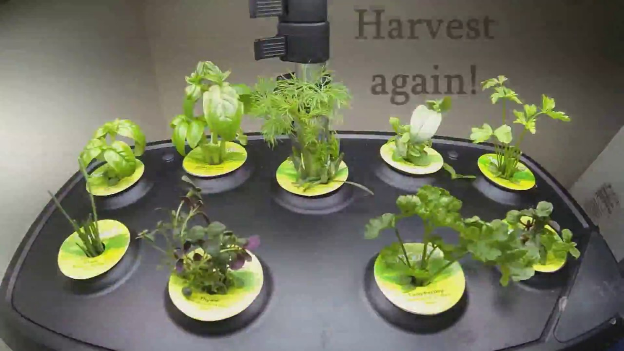 planting-in-all-aerogarden-seed-pods