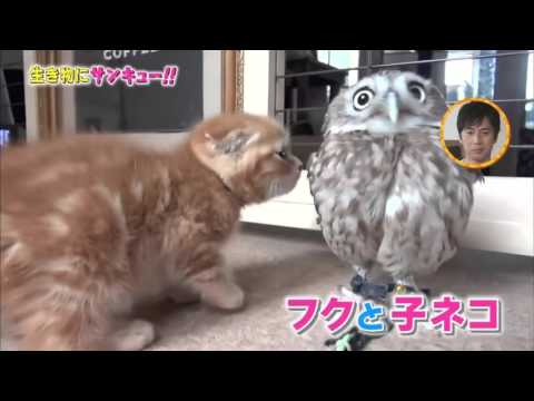 So cute four kitten and owl !