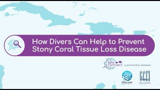 How Divers Can Help to Prevent Stony Coral Tissue Loss Disease