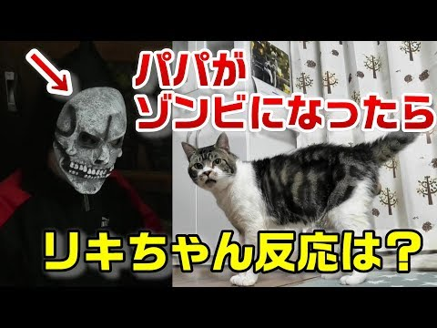 What happens to cats when they become zombies?