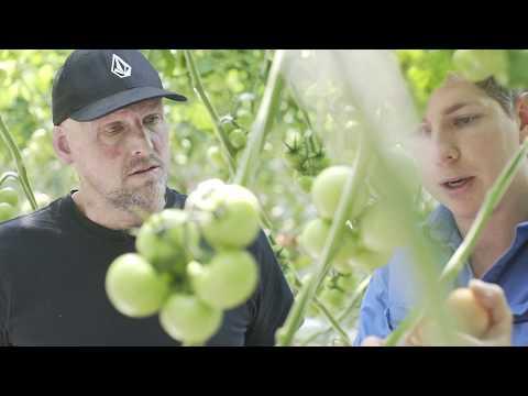 Matt Golinski: Port Macquarie's food trail diaries.mp4