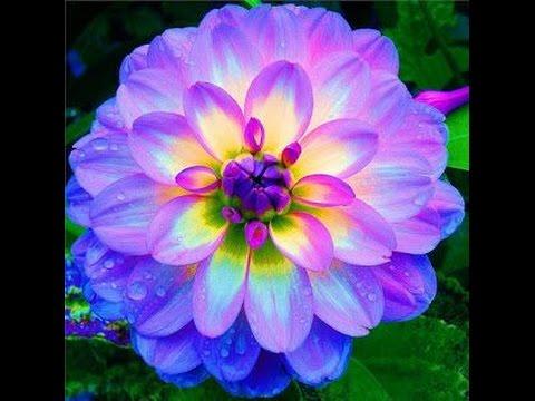 Top 10 flores m s hermosas pero extra as en el mundo - Fotos de flores bonitas ...