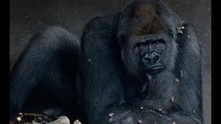 О чем думают животные! Документальные фильмы, фильмы про животных
