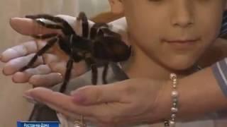 Гигантский паук Алла Борисовна избавила юного ростовчанина от арахнофобии
